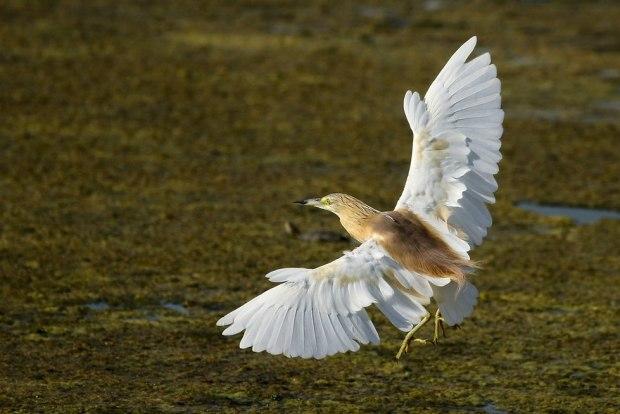 Птица на озере Хефер. Фото: Ярон Чарка