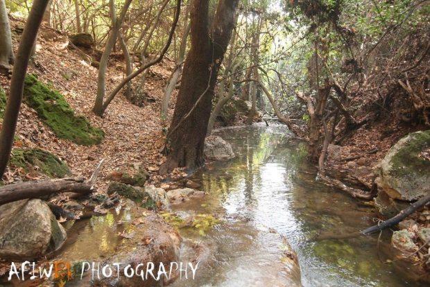 Река Амуд. Фото: Афо Бахрия