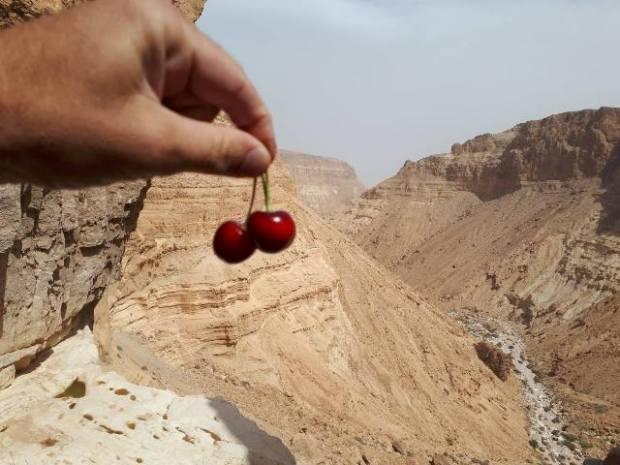 Сады Ятира находятся на высоте 800 м над уровнем моря, что идеально для черешни. Фото: Нахшон Афик