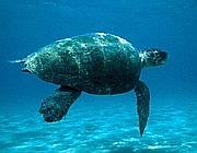 La tartaruga Martina (Cts)