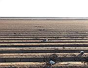 Proiettili di marijuana nei campi vicino al confine