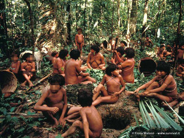 Molti farmaci utilizzati oggi dalla medicina occidentale vengono dai popoli indigeni e hanno salvato la vita di milioni di persone (a cura di Joanna Eede ? www.survival.it)