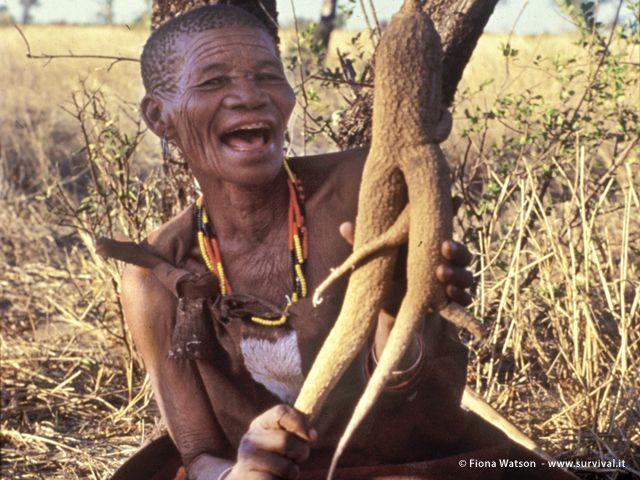 In tempo di siccità i boscimani assumono liquidi dalle radici e dai meloni tsama. «Impari quello che la Terra ti suggerisce», dice Roy Sesana dal Botswana (a cura di Joanna Eede ? www.survival.it)