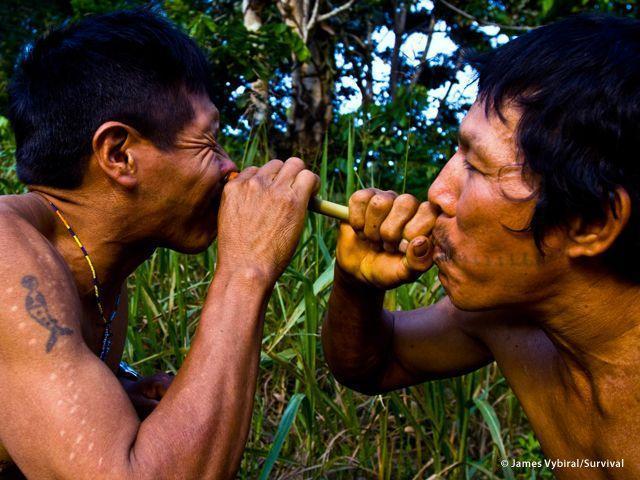 Prima della caccia i Matsés si soffiano il tabacco nel naso per aumentare l?energia, o assumono un veleno di rana che garantisce lucidità e forza per giorni (Joanna Eede ? www.survival.it)