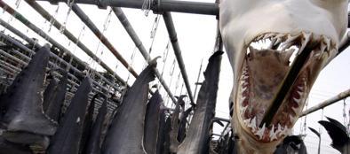 Una testa e pinne di squalo appese ad essiccare (Epa)