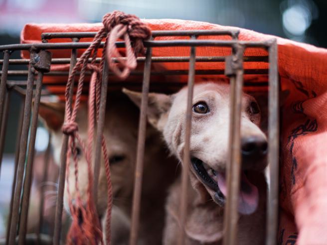 Svolta in Cina: sarà vietato mangiare carne di cane o gatto