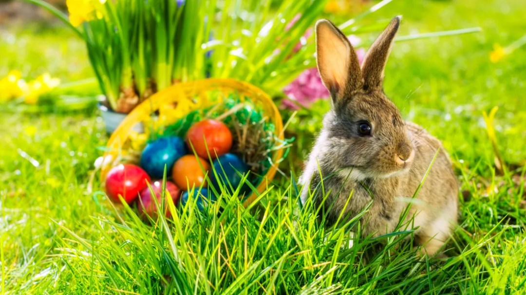 Image result for ukrainian easter eggs images Easter bunny or Easter Rabbit