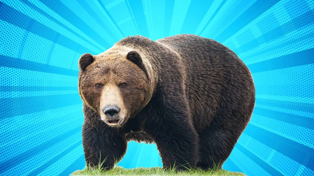 Fat Bear Week is a celebration of nature's biggest bears, like the chunky specimen pictured above.