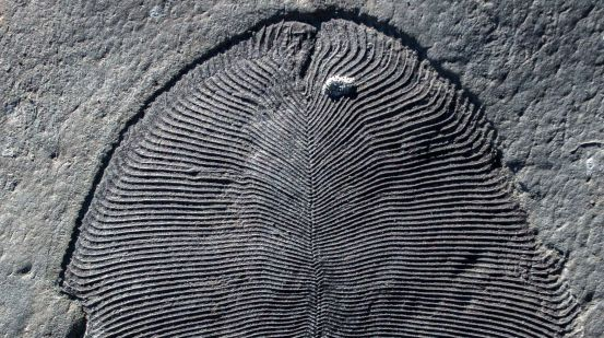 Fossilized fat depicts 550 million-year-old sea creatures that may have been the first animals in the world