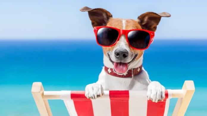 Do Animals Get Sunburns?   Mental Floss