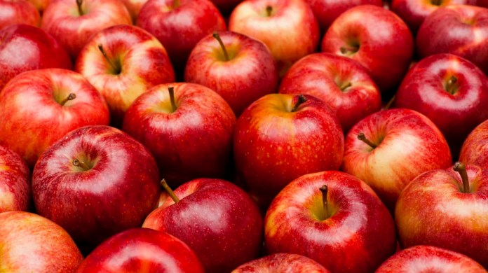 Image result for apple fruit