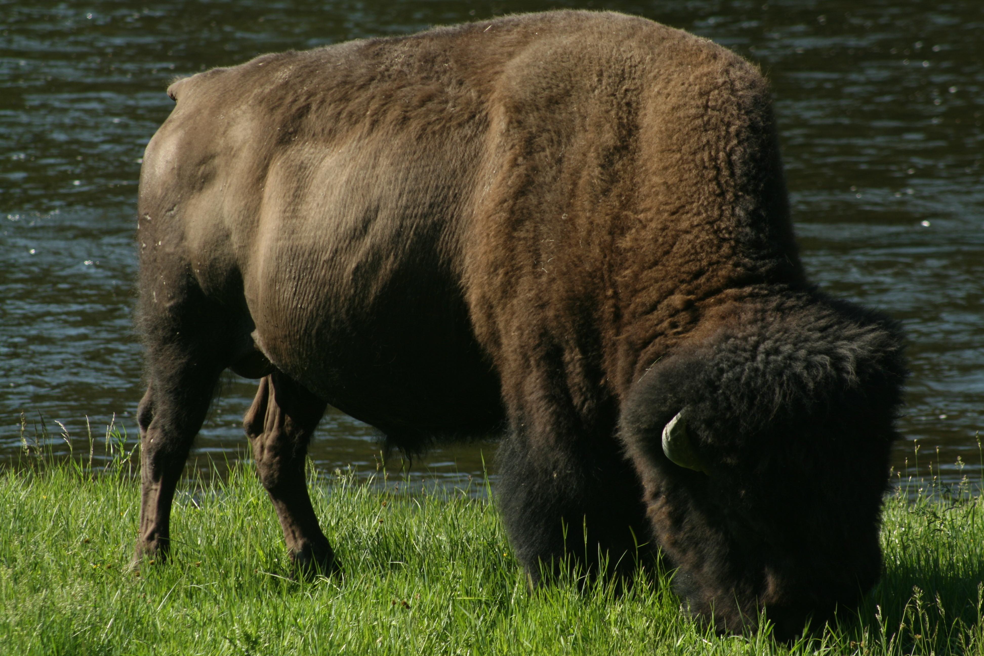Carnivores Omnivores And Herbivores Process