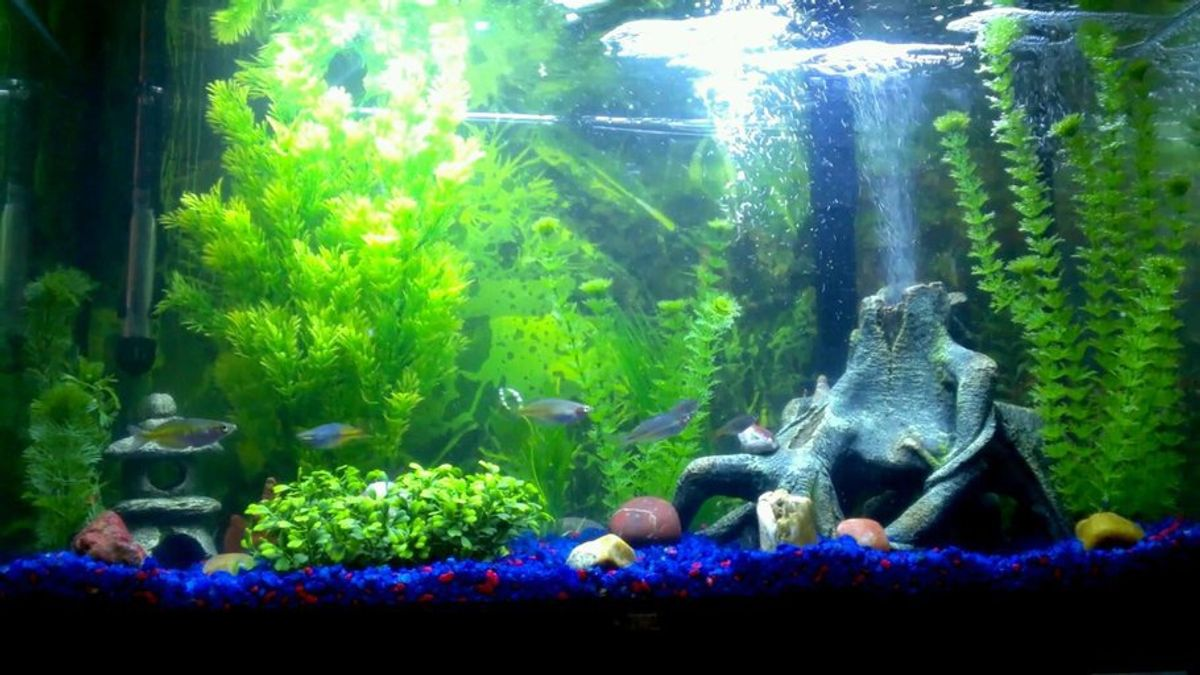 types of freshwater aquarium lighting