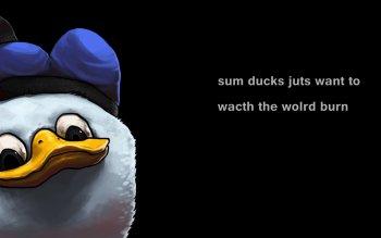 Memes A Full Hd 4k 1080p Home Facebook