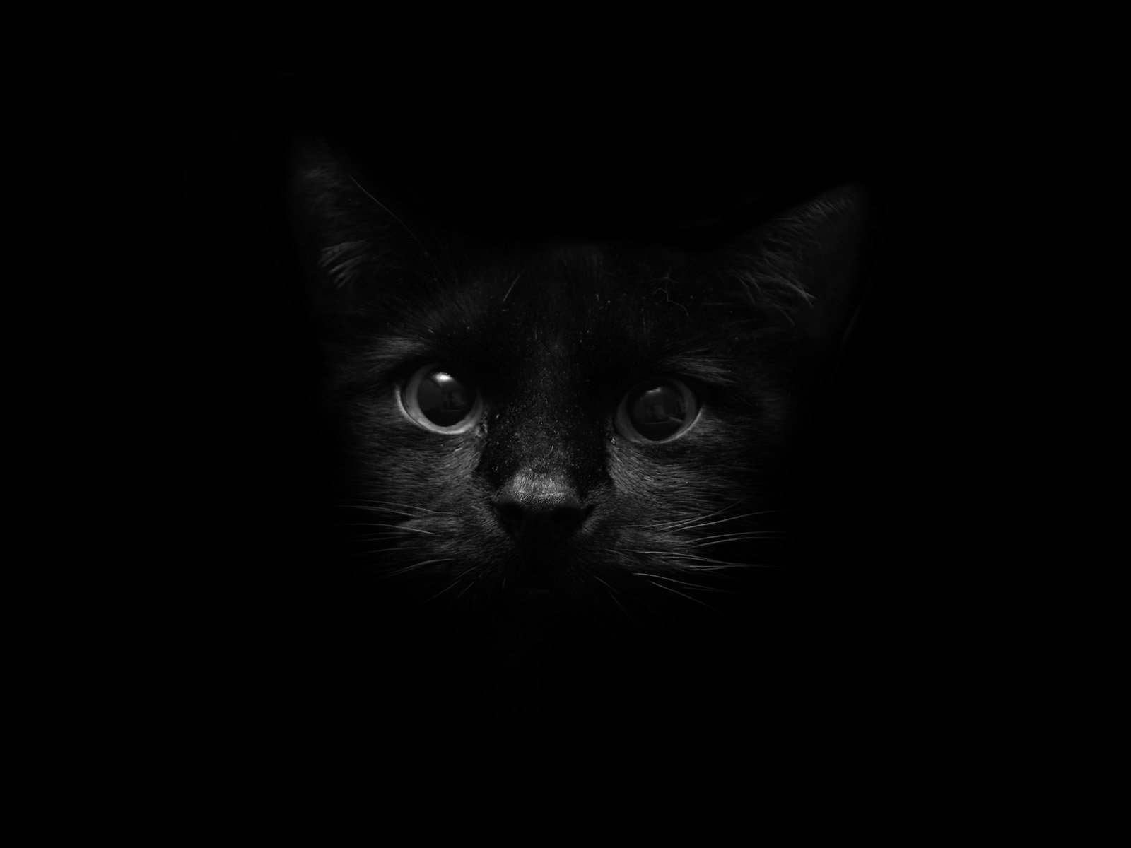 6584 cat hd wallpapers | backgrounds - wallpaper abyss
