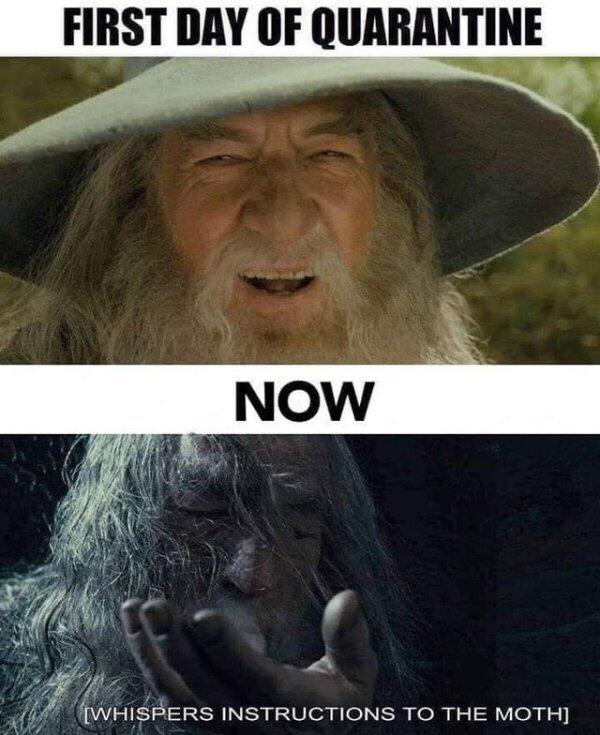 The Best Gandalf Memes Memedroid