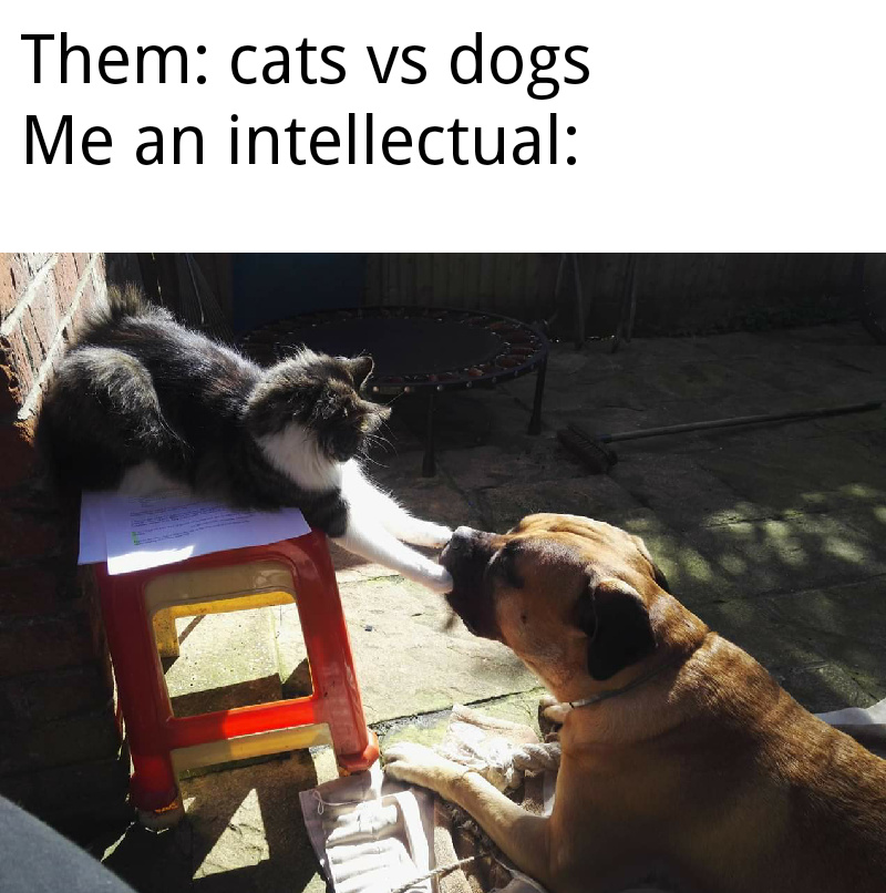 25 Best Memes About Meme Template Website Meme Template