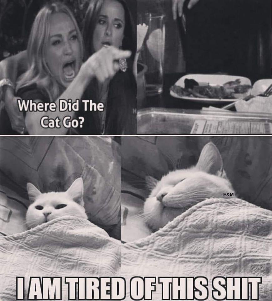 The Best White Cat Memes Memedroid