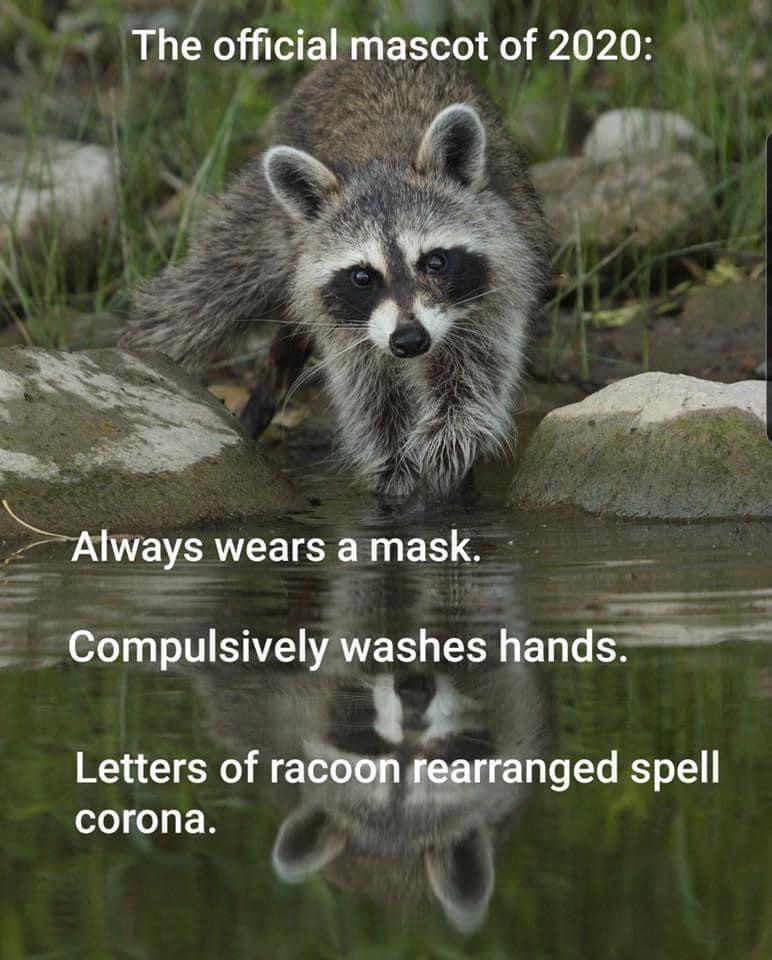 The Best Raccoon Memes Memedroid