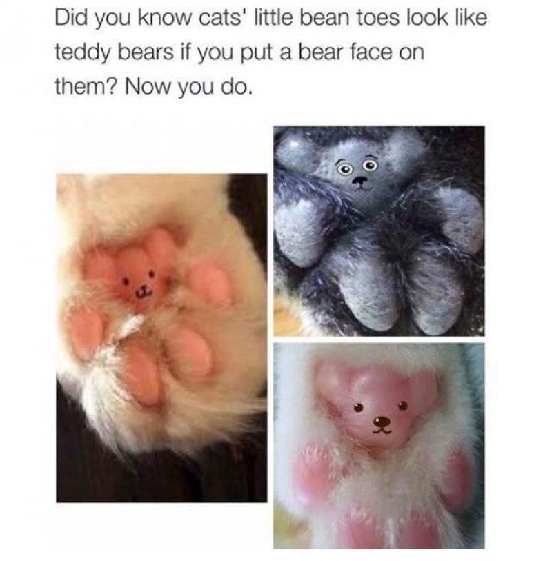 The Best Teddy Memes Memedroid