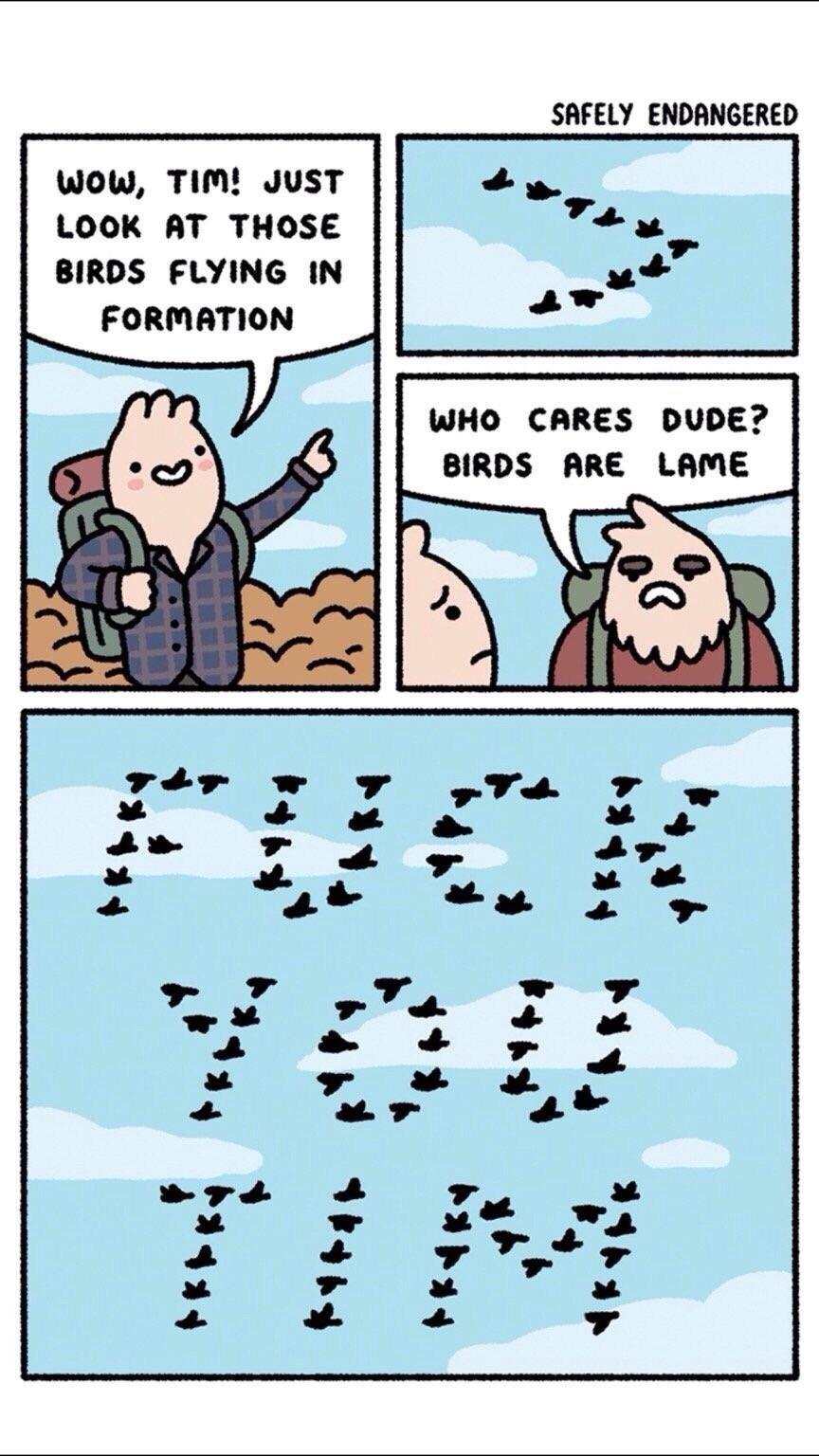 The Best Tim Memes Memedroid