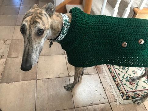 Greyhound Sweater Nutmegknitter