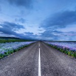 Road Through Flower Field Hd Wallpaper Background Image 1920x1200 Id 707384 Wallpaper Abyss