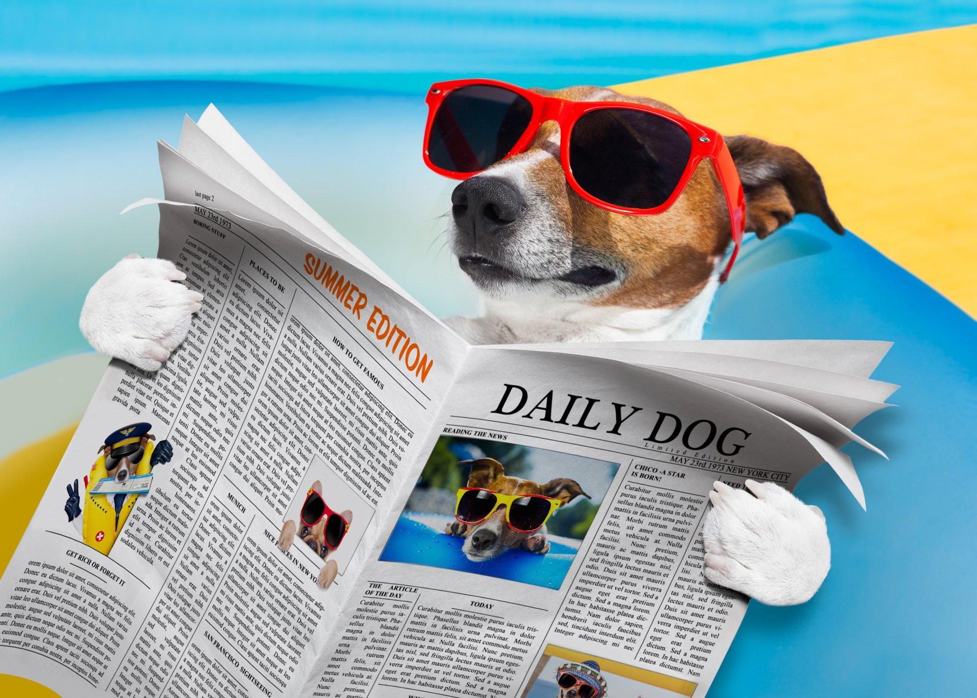 Dog 5k Retina Ultra HD Wallpaper Background Image