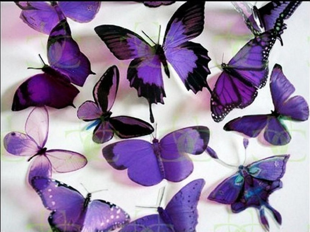 https://i2.wp.com/images4.fanpop.com/image/photos/17400000/Purple-Butterflies-butterflies-17473487-1024-768.jpg