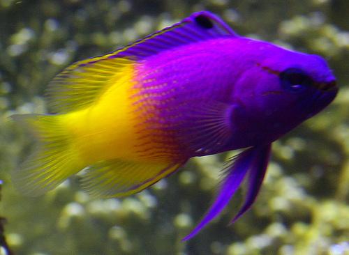 bright colored fish bright colors photo