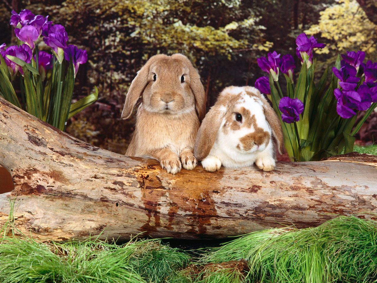 Garden Rabbits Decor