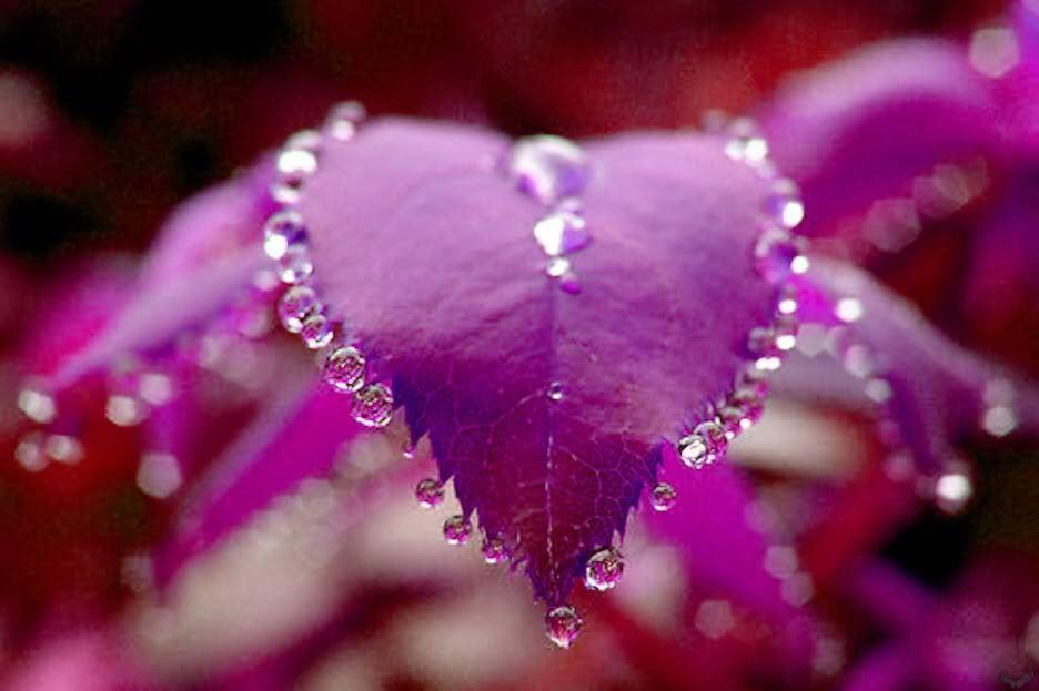 Many Flowers Beautiful Nature Photo 22639508 Fanpop