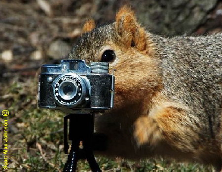 Image result for squirrel with camera