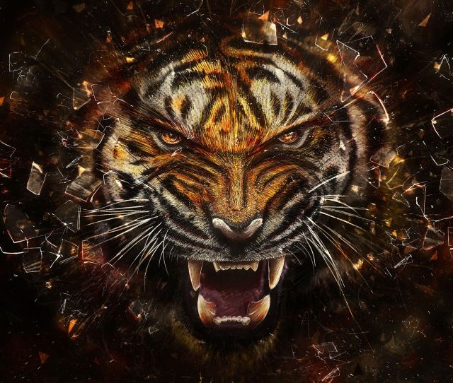 Tigers Images Angry Tiger Hd Wallpaper And Background Photos