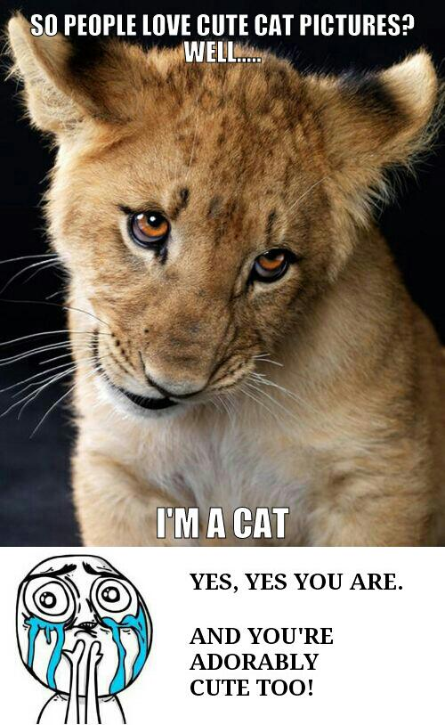 50 Very Funny Lion Meme Pictures And Images