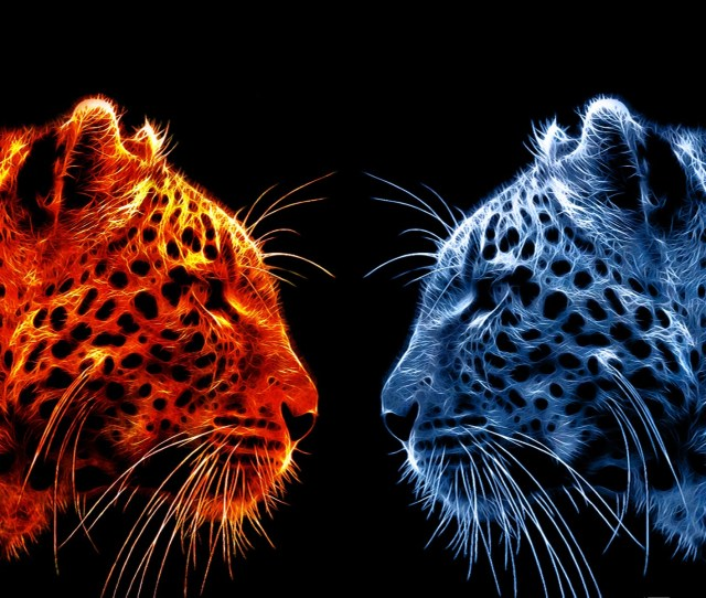 Fire Leopard Vs Ice Leopard Hd Wallpaper Background Image 1920x1200 Id711571 Wallpaper Abyss