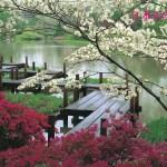 Japanese Landscape Japan Photo 34113668 Fanpop