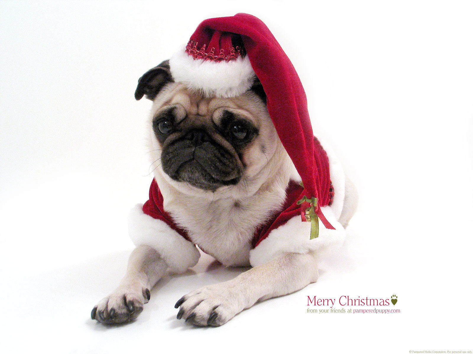 Funny Pugs Images Christmas Pug HD Wallpaper And