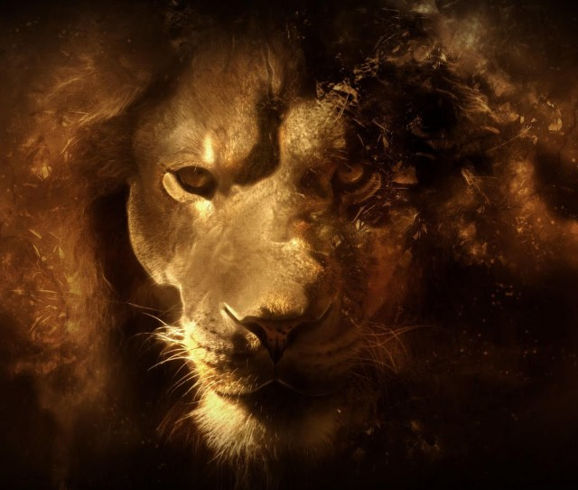 Random Images Lion Wallpaper Hd Wallpaper And Background Photos