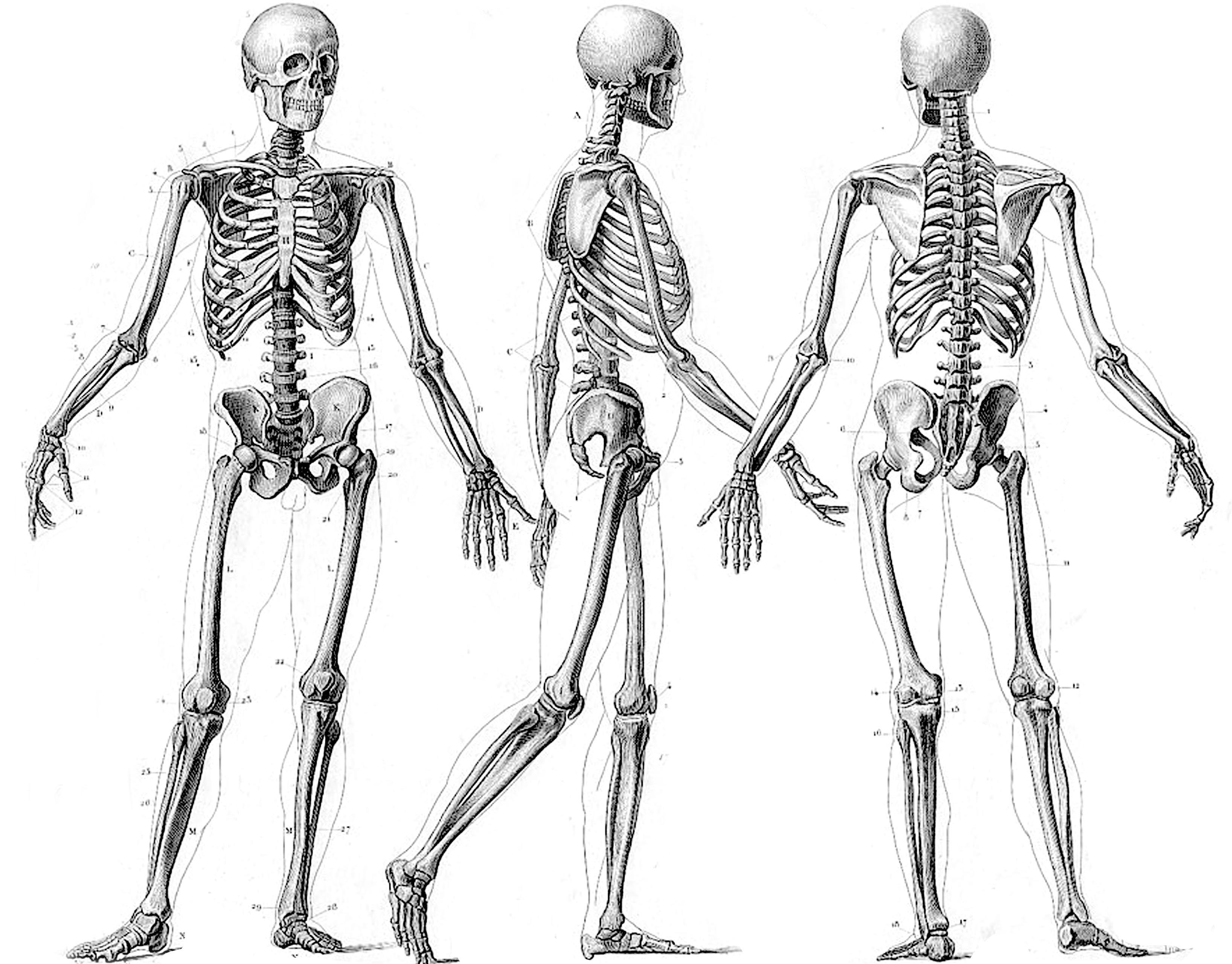 130 Squelette Fonds D Ecran Hd Arriere Plans