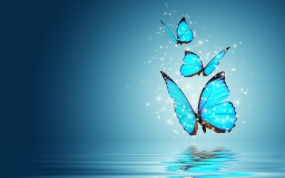 222 Butterfly HD Wallpapers | Backgrounds - Wallpaper Abyss