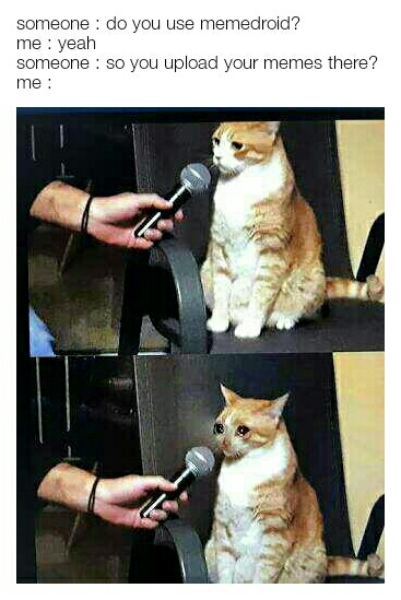 The Same Crying Cat Meme Every Day Home Facebook