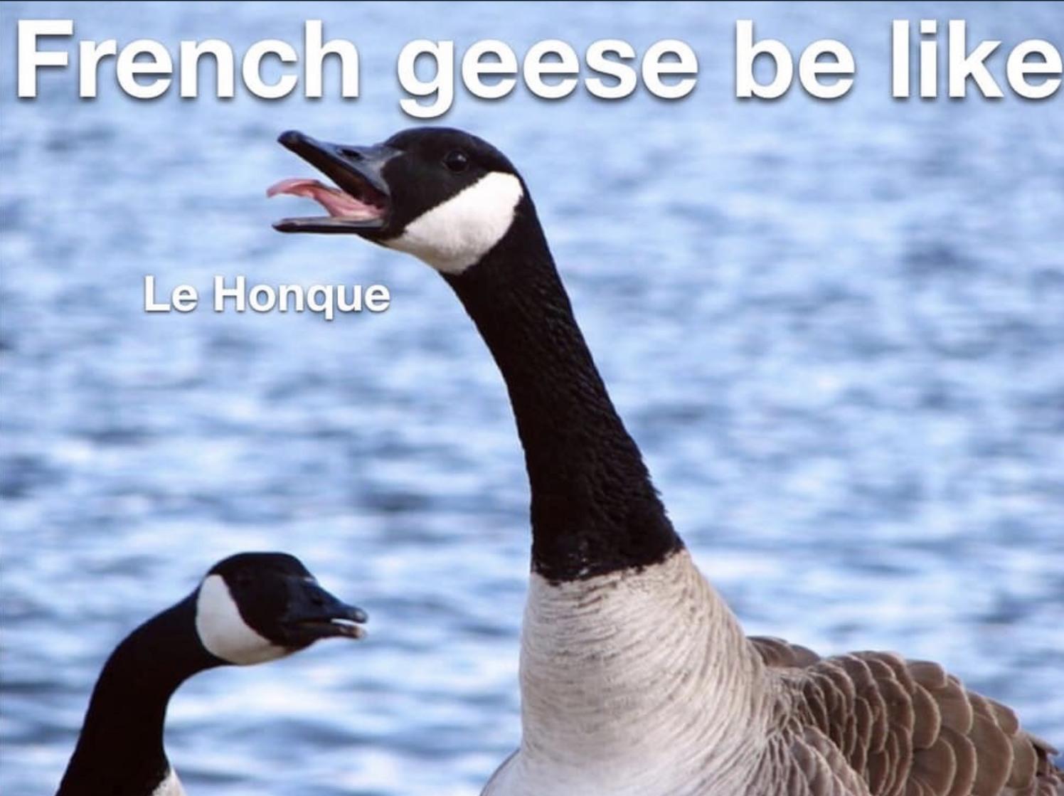 The Best French Memes Memedroid