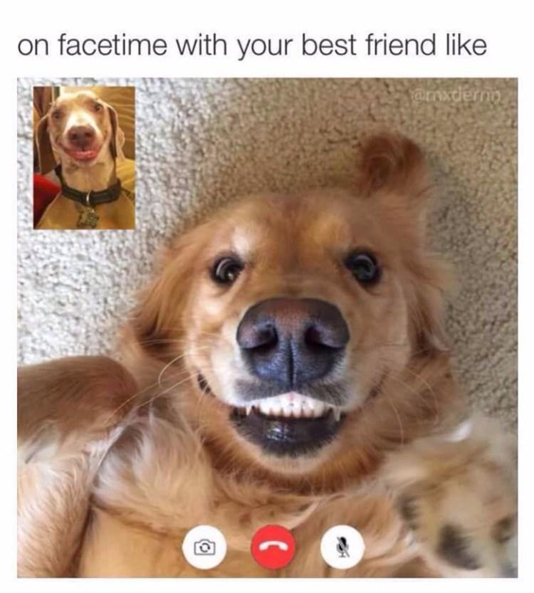 It's Doge - Meme by OCisGuilty :) Memedroid