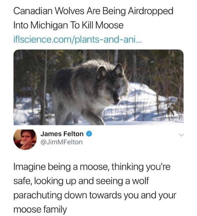 The Best Wolf Memes Memedroid