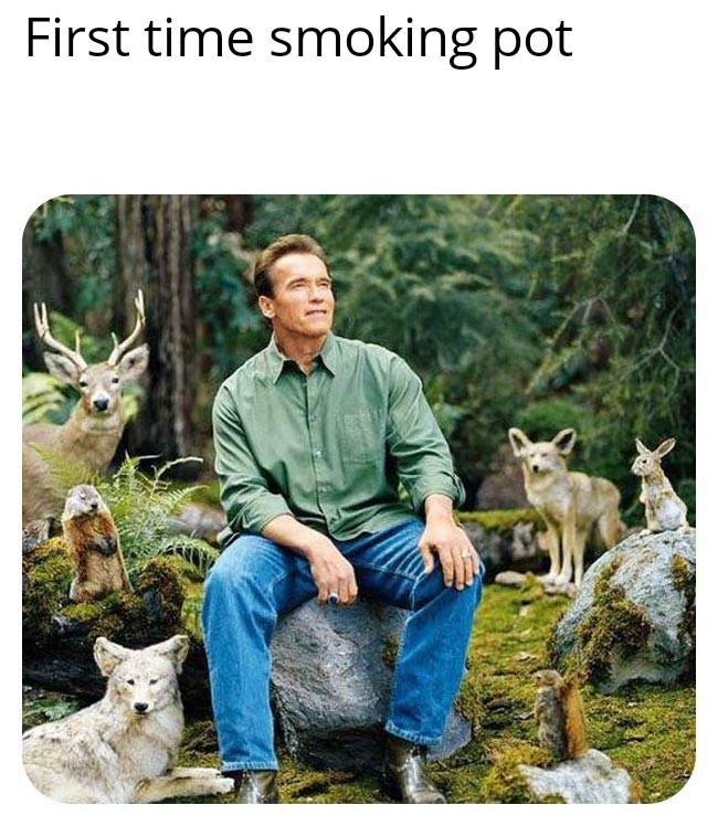 The Best Pot Memes Memedroid