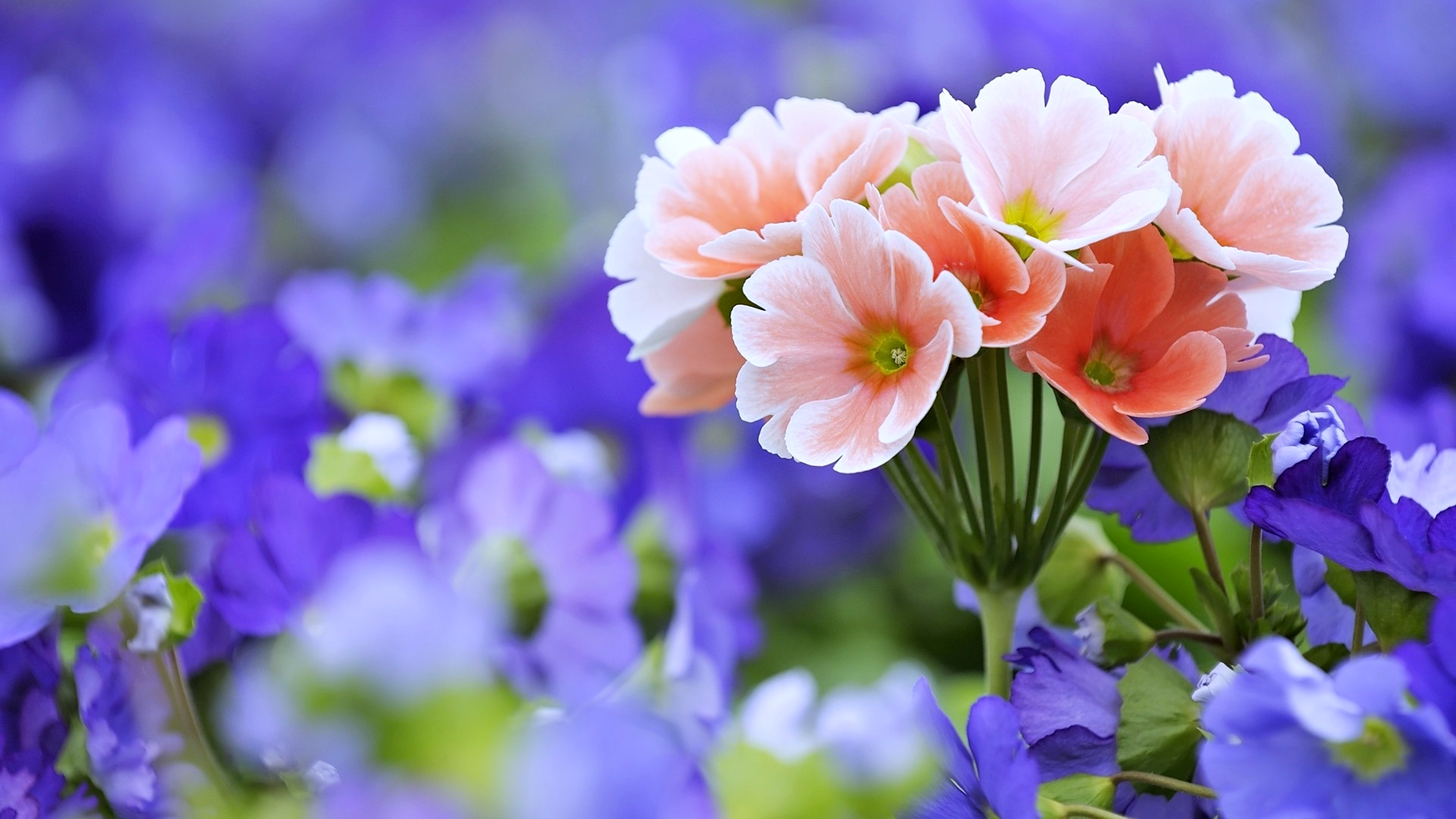 4744 Flower Hd Wallpapers Background Images Wallpaper Abyss