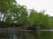 Delaware Water Gap, kayak, fallen tree