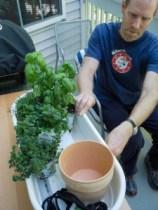 Plants, pots and the gardener