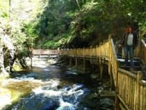 Clover @ Bushkill Falls
